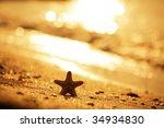Starfish - stock photo