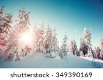 majestic winter trees glowing... | Shutterstock . vector #349390169