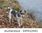 fox terrier dog breed. | Shutterstock . vector #349412441
