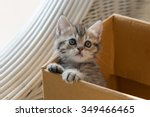 Stock photo close up of cute tabby kitten holding paper box in the moring 349466465