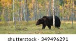 brown bear with forest... | Shutterstock . vector #349496291