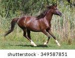 beautiful young arabian mare... | Shutterstock . vector #349587851
