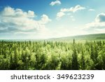 Постер, плакат: forest in sunny day