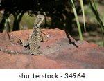 water dragon   Shutterstock . vector #34964