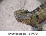 water dragon   Shutterstock . vector #34970