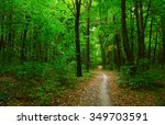 trees in a green forest  | Shutterstock . vector #349703591