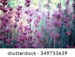 season flowers | Shutterstock . vector #349733639