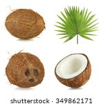 Fresh Coconuts With Palm Leaf ...