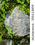 Small photo of Green Adiantum and Moss Grow on Natural Stone Wall, Detail, Background