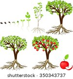 Life Cycle Of Apple Tree