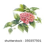 watercolor painting of flower... | Shutterstock . vector #350357501