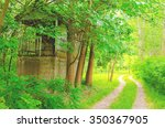 Hiking In The Forest...   Path...