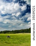 dramatic sky over a cow in the... | Shutterstock . vector #35039221