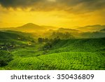 sunrise of tea plantation in... | Shutterstock . vector #350436809