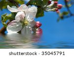 apple tree blooming on blue... | Shutterstock . vector #35045791