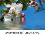 apple tree blooming on blue...   Shutterstock . vector #35045791