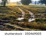 tractor harvester tracks in... | Shutterstock . vector #350469005