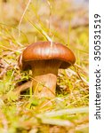 Small photo of Basidiomycota