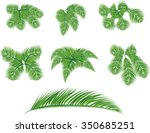 palm tree branches set | Shutterstock .eps vector #350685251