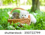 Stock photo group of little kitten in a basket on the grass 350722799