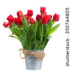 Fresh Red Tulip Flowers In...