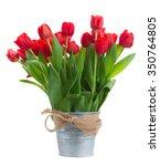 Fresh Red Tulip Flowers In...