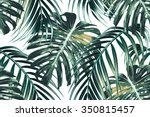 tropical palm leaves  jungle... | Shutterstock .eps vector #350815457