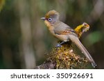 beautiful spectacled barwing... | Shutterstock . vector #350926691
