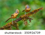 beautiful couple of spectacled... | Shutterstock . vector #350926739