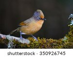 beautiful spectacled barwing... | Shutterstock . vector #350926745