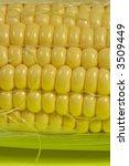 Fresh Sweet Corn Close Up