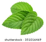 fresh mint leaves isolated on... | Shutterstock . vector #351016469