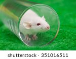 White Mouse In Transparent...