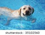 dog | Shutterstock . vector #35102560