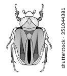 calligraphic beetle drawing in... | Shutterstock .eps vector #351044381