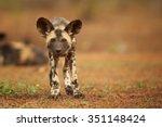 portrait of african wild dog... | Shutterstock . vector #351148424