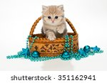 British Kitten In A Basket And...