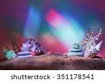 Sea Shells With Sand....