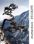 alone tree on hill  winter  in... | Shutterstock . vector #35118295