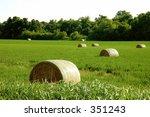Hay Bundles In Green Fields