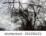 Barren Tree Branches Against A...