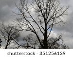 Barren Tree Branches Against...