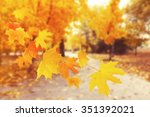 autumnal park with falling... | Shutterstock . vector #351392021