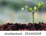 young tree on nature. | Shutterstock . vector #351443249