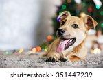 Small Cute Funny Dog Laying At...