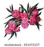 Oleander Branch  Isolated On A...