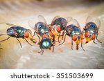 close up of many fly or... | Shutterstock . vector #351503699