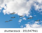 Flock Of  White Pelicans Flyin...
