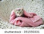 Cute Soggy Kitten After A Bath...