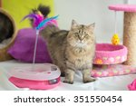 Stock photo cute tabby cat with many toys 351550454